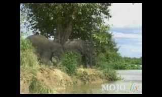 פיל נופל למים - כל מילה נוספת מיותרת