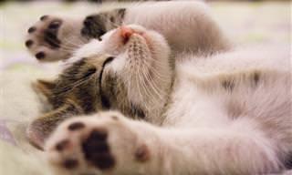 13 טיפים פשוטים שיעזרו לכם לישון טוב יותר