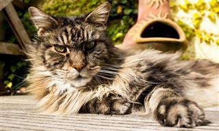 בחן את עצמך: טריוויית זיהוי גזעי חתולים וכלבים