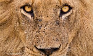 18 תמונות טבע ייחודיות בכיכובן של חיות שנהנות להצטלם