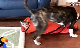 החתול הנעלם והכלב המבולבל: סרטון מקסים שיעשה לכם את היום!