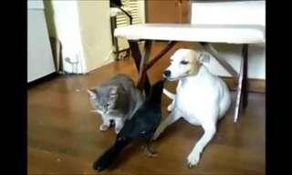 חיות מאכילות חיות - סרטון מצחיק!