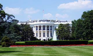 7 תיקים ותפקידים ממשלתיים הזויים מרחבי העולם
