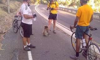 החום האוסטרלי מוציא את דובי הקואלה לרחובות
