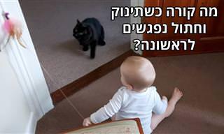 חתול ותינוק משחקים לראשונה יחדיו – מקסים במיוחד!