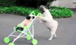 נראה אותך מאלף את הכלב שלך ככה