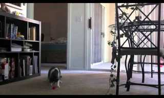 החתול שנע לצלילי הגיטרה