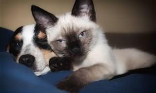 20 סימנים למחלות בקרב חתולים וכלבים