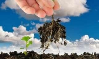 פתרונות ביתיים לקטילת עשבים שוטים