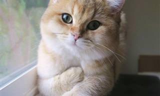 19 חתולים וכלבים שישכיחו מכם את כל הצרות שלכם