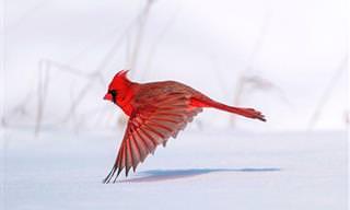 10 תמונות זוכות מתחרות צילום הציפורים אודובון 2021