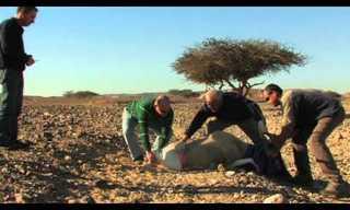 תיבת נוח מודרנית בערבה