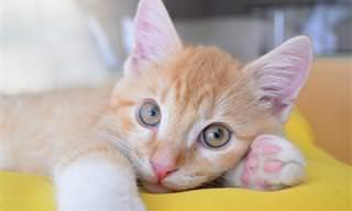 מדריך העצות השלם לטיפול בחתולים
