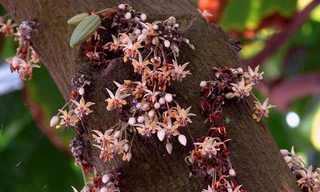 מוצרים מן הצומח בצורתם הטבעית