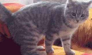 10 גיפים של חתולים בסיטואציות קורעות מצחוק