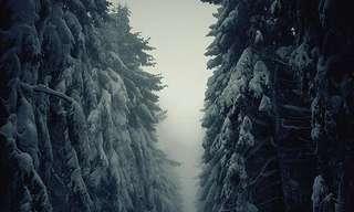 תמונות מדהימות של חורף לבן