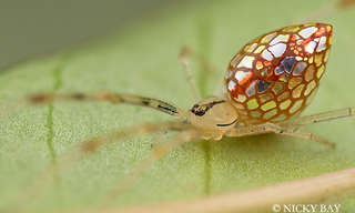 15 צילומי עכבישים נדירים ומיוחדים במינם
