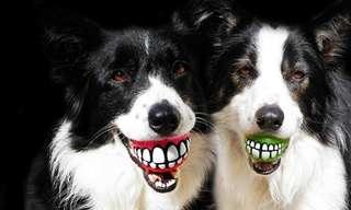 15 מתנות שכל בעלי הכלבים היו שמחים לקבל