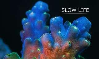 סרטון טבע מדהים של בעלי החיים הימיים