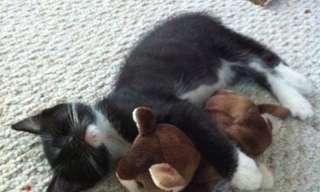 חתולים שאוהבים בובות פרווה