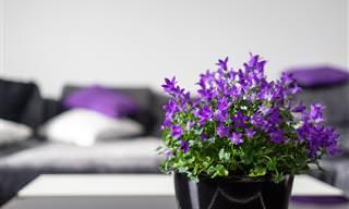 15 צמחים מומלצים לגידול בכל אחד מחדרי הבית
