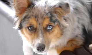 חיות עם 2 עיניים מנוגדות - מדהים!