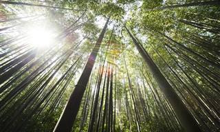 8 שיעורים לחיים שניתן ללמוד מצמח הבמבוק