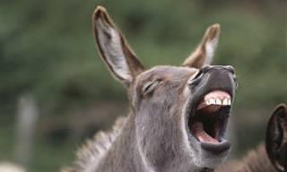 15 תמונות של חיות ברגעים אנושיים במיוחד...