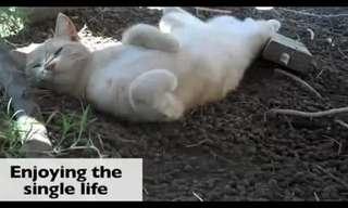 איך חתול רווק מעביר את יום האהבה? מצחיק!