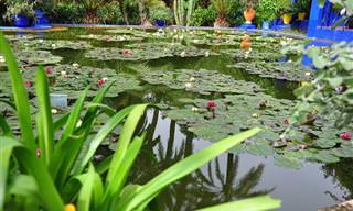 גן מז'ורל, הגן הבוטני עוצר הנשימה במרקש, מרוקו
