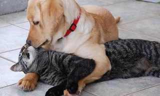 כלבים וחתולים - לא מה שחשבתם...
