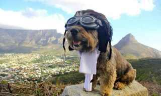 אוסקר הכלב המטייל - מקסים!