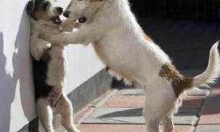 החיות המצחיקות בעולם