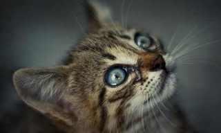 חתולים - תמונות מדהימות של אלכסנדר קאן!