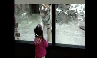 סרטון חמוד ומשעשע של בעלי חיים וילדים בגני חיות