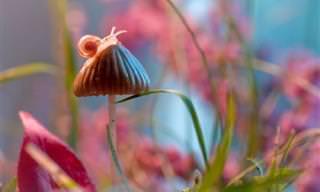 תמונות תקריב מקסימות של החי והצומח שסביבנו