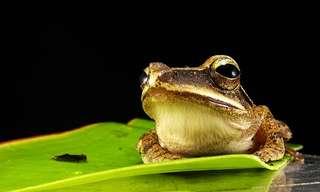 שנהיה לראש ולא לצפרדע
