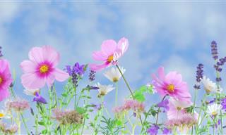2 מבחנים פשוטים עם פרחים שיספרו לכם על עצמכם