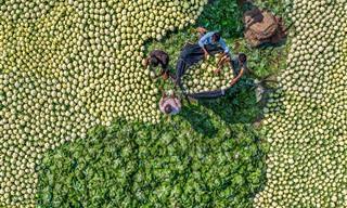 15 התמונות הזוכות בתחרות צלם המזון לשנת 2021 של פינק ליידי