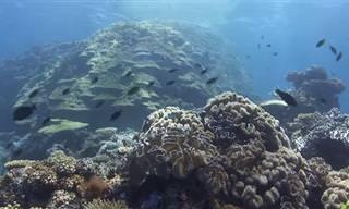 העולם התת ימי הקסום שבין פיג'י וטונגה