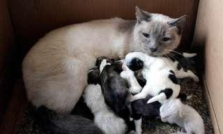 אמא זו אמא, לא משנה מאיזה סוג!
