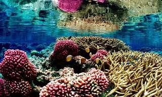 21 צילומים של שוניות אלמוגים מדהימות