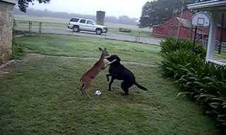 חברות מקסימה בין כלב ובמבי קטן
