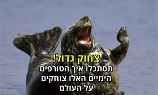 15 תמונות של כלבי ואריות ים צוחקים