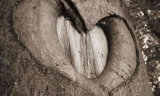 האהבה נמצאת בכל מקום