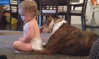 ביקסבי הכלב המפנק - הסרטון הכי חמוד שתראו היום!