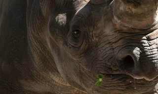 50 תמונות יפות של חיות!