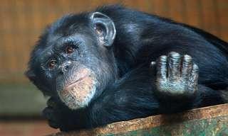 החיות חכמות הרבה יותר ממה שחשבתם
