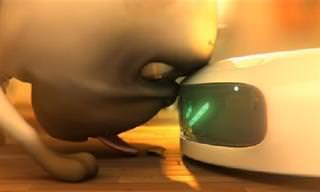 סרטון אנימציה משעשע: הכלב דאסטין מול רובוט הניקוי