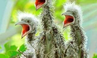תמונות עוצרות נשימה של מיני ציפורים